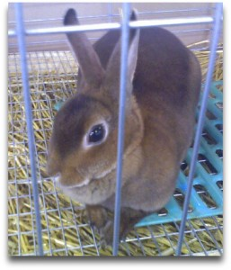rabbit-rabbit-rabbit-nov-cropped